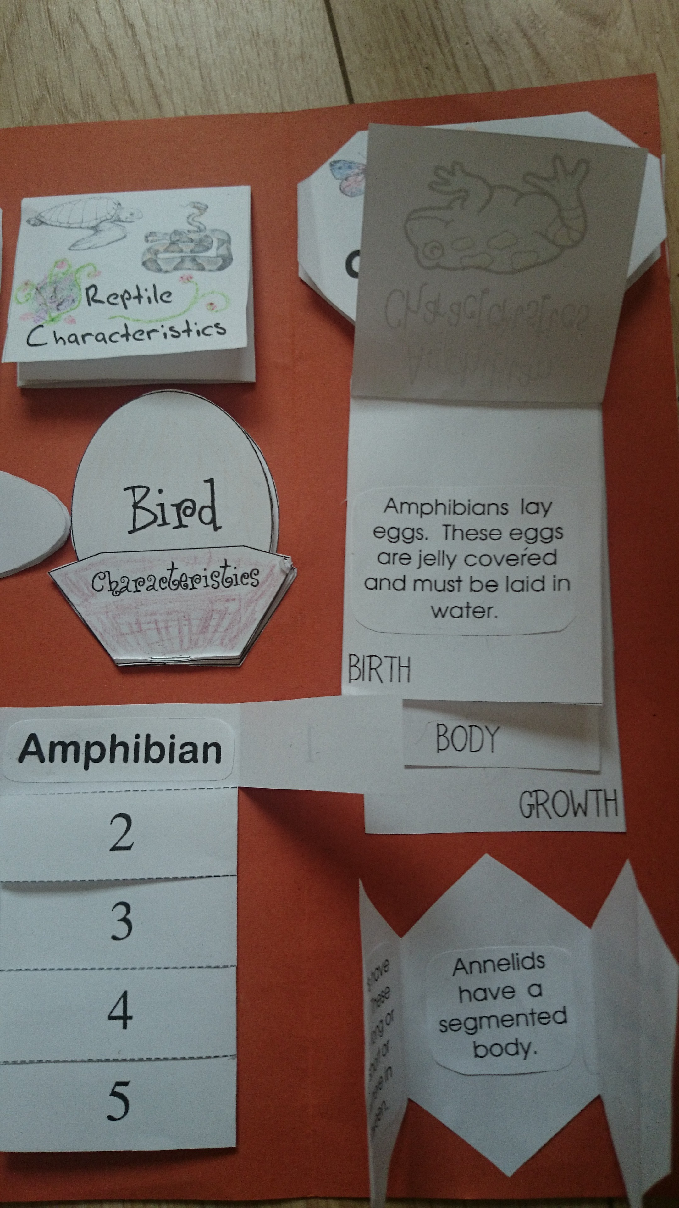 Animal Classification Lapbook (Animal Kingdom) | The Resources of ...