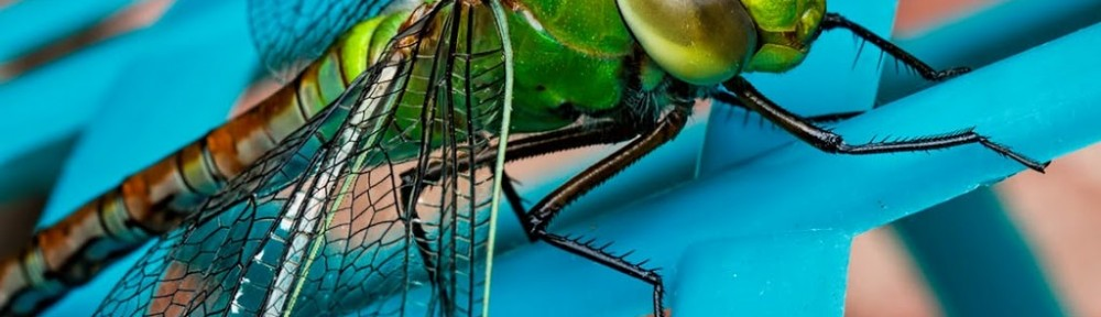 dragonfly-insect-green-closeup-51350.jpeg.jpg