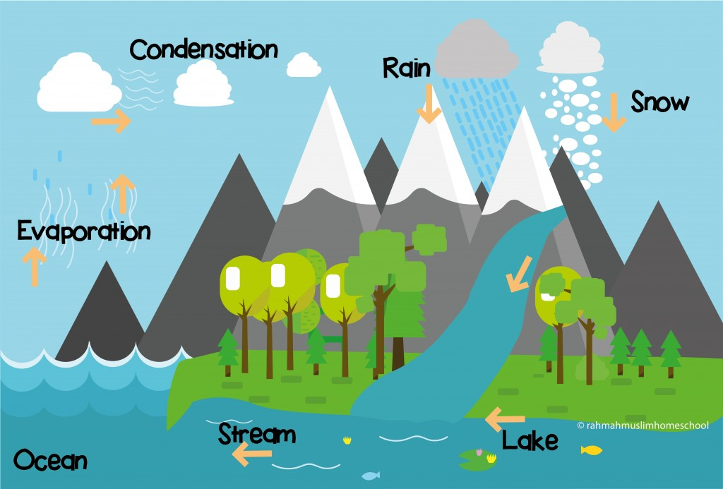 The water cycle-01-01